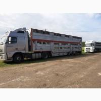 Транспортировка скота по всей Росиии