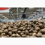 Картофель качественный оптом