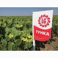 Семена гибрида подсолнечника «Тунка» от Лимагрен