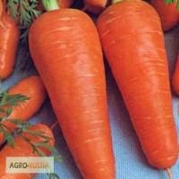 Семена моркови Курода Шантанэ (Саката)