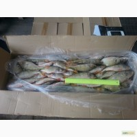 Речная и озерная рыба на производство