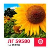 ЛГ 59580 гибрид подсолнечника ЛИМАГРЕЙН (Limagrain) под ЭКСПРЕСС