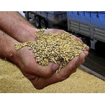 Пшеница 3 класса в Твери