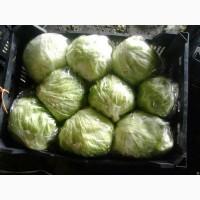 ООО «МЕЙГУ» осуществляет прямые поставки овощей и фруктов из Ирана