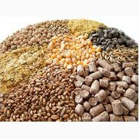 Закупаем пшеница кормовая, ячмень, горох, кукуруза