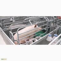 Станки для опороса свиноматки