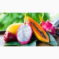 Экзотические фрукты в Крыму