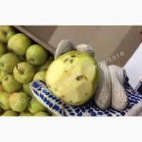 Яблоко оптом 2-ой сорт