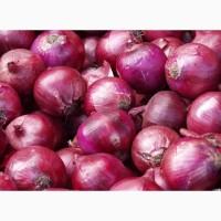 Лук фиолетовый
