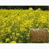 Семена горчицы желтой Славянка