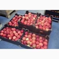 Реализуем оптовую продажу яблок Гала от сельхозпроизводителя