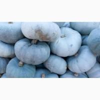 Приобретайте оптом тыкву сорта «Зимняя сладкая»