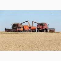 Услуги уборки урожая зерновых комбайнами