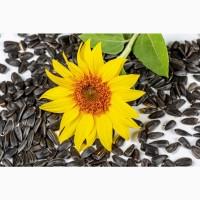Семена гибрида подсолнечника МАС 85.СУ от Mas Seeds