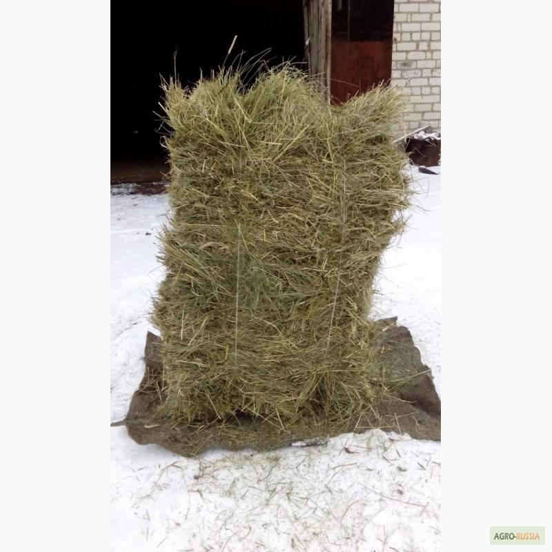 знакомства шилово рязанская обл