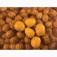 Картофель мытый оптом