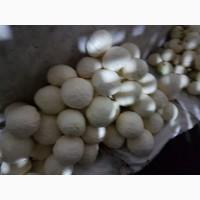 Продам капусту оптом от 10 тонн 9руб/кг