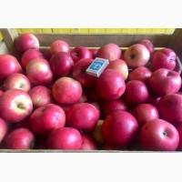 Оптовые поставки вкусных яблок от агрофирмы