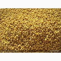 Семена горчицы белой Рапсодия