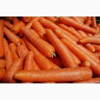 Продаю оптом морковь от прозводителя ип пушкин