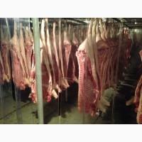 Свинина оптом, от производителя, промзабой, гост