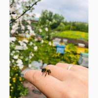 Продаю сильные пчелосемья