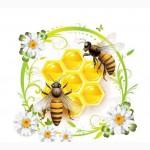 Закупаю мёд оптом