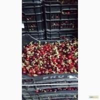 Продам клубнику, черешню, Македония - Сербия урожай 2016