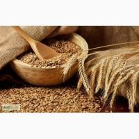 Зерновые культуры оптом