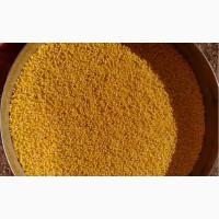 Продажа кукуруза фураж, кормовая