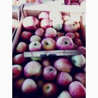 Яблоки, сорт Джонапринц, Айдаред