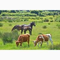 Лошади, коровы, бычки от50-500кг