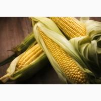 Семена гибридов кукурузы импортного производства