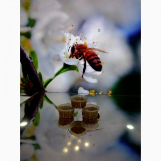 Мёд липово-цветочный, цветочная пыльца, перга