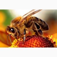 Принимаем заказы на Пчелопакеты 2021