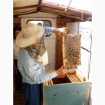 Продаю сильные пчелопакеты 9 шт