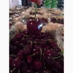 Продаем черешню из Испании