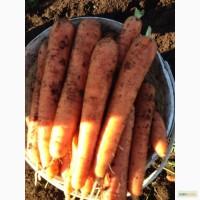 Продаем морковь, картофель от 20 до 5000 тонн