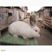 Продам мясо кролей