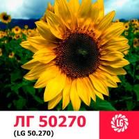 ЛГ 50270 гибрид устойчив к 7 рассам заразихи ОР7 ЛИМАГРЕЙН