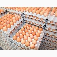 Продам яйцо куриное С1