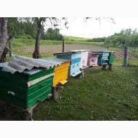 Продам рой пчел