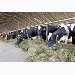 Продажа крупно-рогатого скота