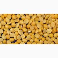 Экспорт желтый горох (продовольственный) в Иран, Сирию, Ливию, Турцию и другие страны FOB