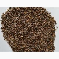 Семена сосны, ели обыкновенной (Европейской )1 класс качества