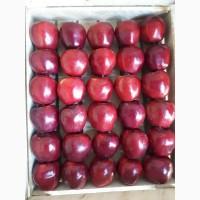 Яблоки Старкримсон оптом урожай 2020г., от поставщика с доставкой