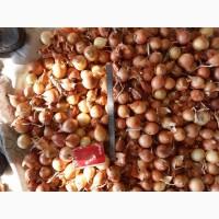 Продаем лук репчатый, сорт Манас, калибр 3