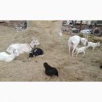 Овощная некондицию на корм скоту