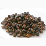 Семена женьшеня настоящего (Panax ginseng)