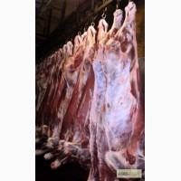 Мясо-говядина быки молодняк в полутушах